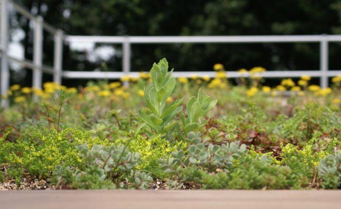 De voordelen van een groen dak